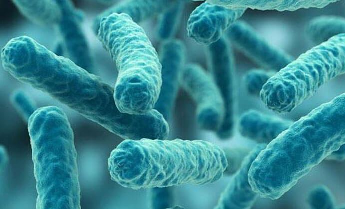 Microbul cancerului a fost descoperit!